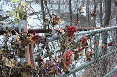 Dying flowers are woven through a chain-link fence as a memorial