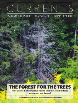 Magazine page image for Forest for the Trees