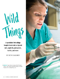 Page image for Wild Things